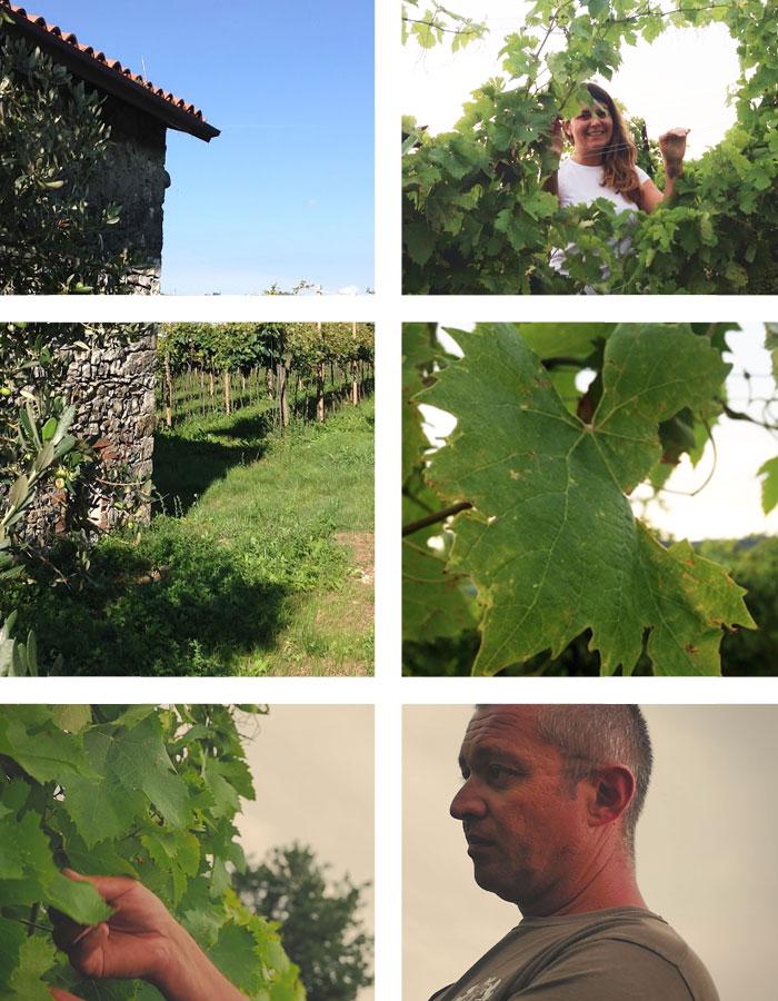 il-progetto-immagini-vino